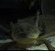 Ayuda para montar un acuario para un pez betta - last post by shivan