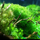 Bombilla led para iluminar acuario - last post by Jec