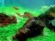El pez mas pequeño del mundo (Paedocypris) - last post by silverfish