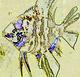 II Temporada    - Trivial de la Enciclopedia-Pterophyllum- - last post by Cande